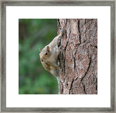 Backyard Squirrel Framed Print