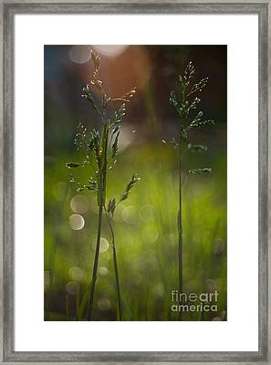Backyard Framed Print by Sue OConnor