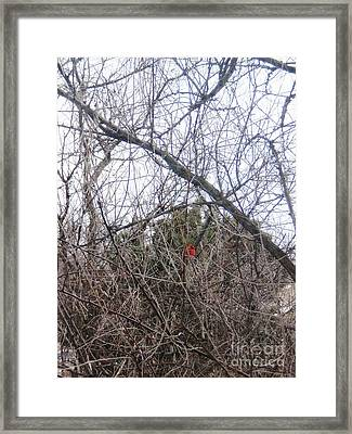 Backyard Visitor Framed Print by Trilby Cole