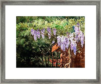 Backyard Wisteria Framed Print by Peter Sit
