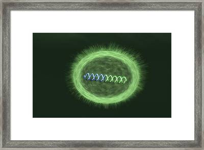 Bacteria With Integrated Foreign Bacteria Framed Print by Equinox Graphics