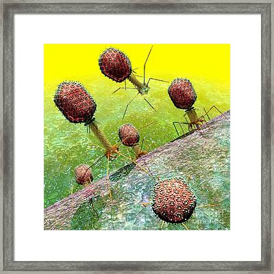 Bacteriophage T4 Virus Group 2 Framed Print