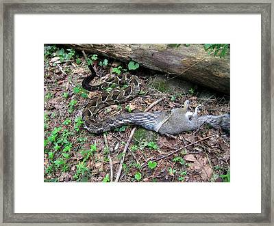 Framed Print featuring the photograph Bad Day In Squirrelville by Doug McPherson