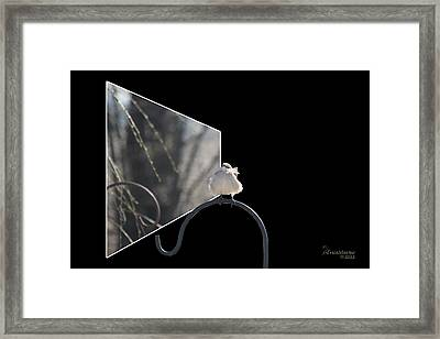 Bad Feather Day Framed Print by EricaMaxine  Price