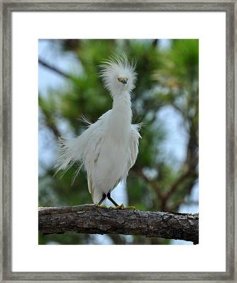 Bad Hair Day Framed Print by Rick Frost