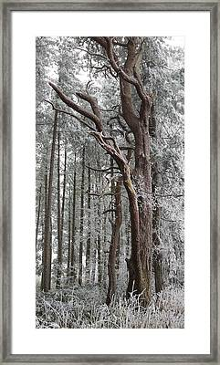 Badbury Clump Framed Print by Michael Standen Smith