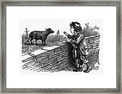 Bah, Bah, Black Sheep Framed Print