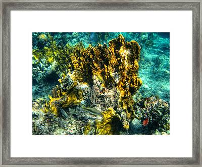 Bahamas 049 Framed Print by Lance Vaughn