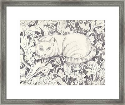 Bailey The Cat Framed Print by John Keaton