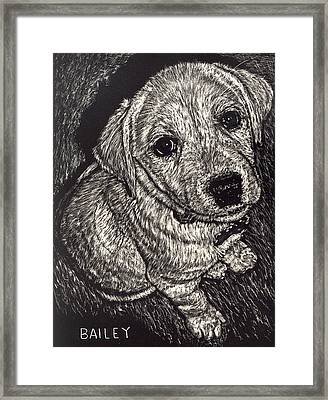 Bailey The Puppy Framed Print by Robert Goudreau