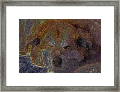 Baily May Framed Print by One Rude Dawg Orcutt