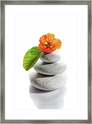 Balanced Stones And Red Flower Framed Print