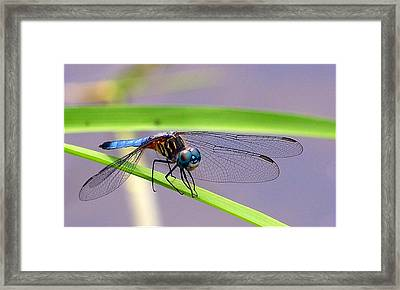 Balancing Act Framed Print by Robin Pross