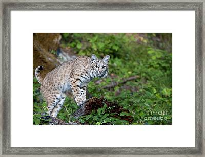 Balancing Act Framed Print by Sandra Bronstein