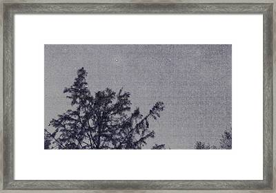 Bald Cypress And Stars. Framed Print by Brandon Smith