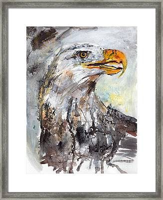 Bald Eagle Framed Print by Ginette Callaway