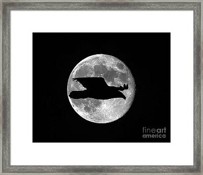 Bald Eagle Moon Framed Print by Al Powell Photography USA