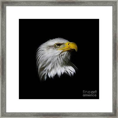 Framed Print featuring the photograph Bald Eagle by Steve McKinzie