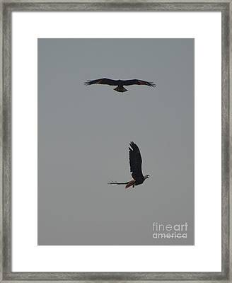 Bald Eagles Framed Print by Gordon Mooneyhan