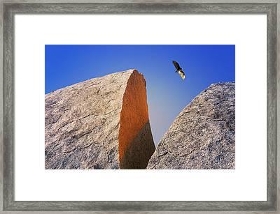 Bald Rock With Soaring Vulture Framed Print