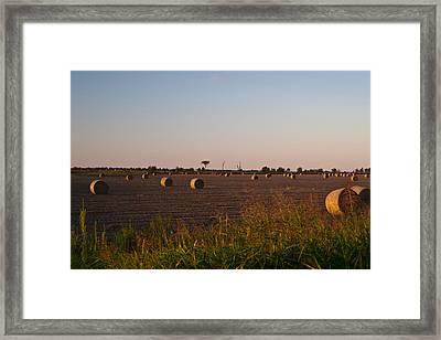 Bales In Peanut Field 10 Framed Print by Douglas Barnett