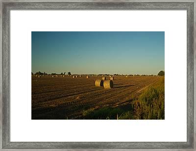 Bales In Peanut Field 13 Framed Print by Douglas Barnett