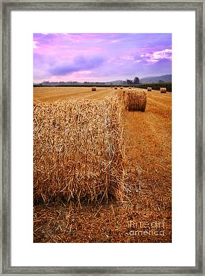 Bales Of Hay At Sunrise Framed Print by HD Connelly