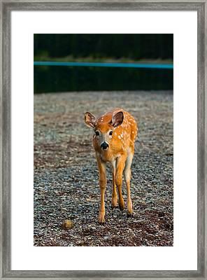 Bambi Framed Print by Sebastian Musial