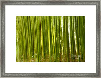 Bamboo Abstract Framed Print by Gaspar Avila