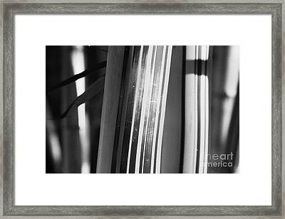 Bamboo Closeup Framed Print