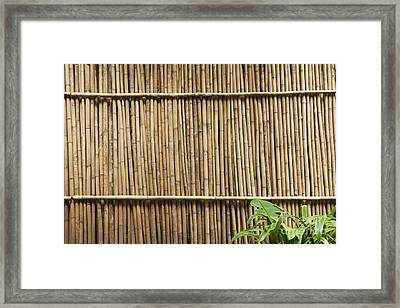 Bamboo Fence Framed Print by Don Mason