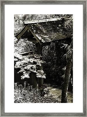 Bamboo Garden -2 Framed Print