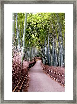 Bamboo Grove Framed Print by Shadie Chahine