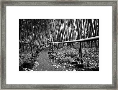 Bamboo Path Framed Print