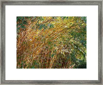 Bamboo Stand Please Buy Me Framed Print by Michael Clarke JP