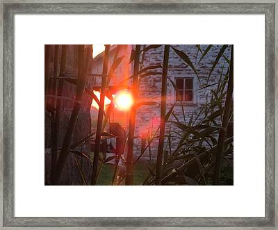 Framed Print featuring the photograph Bamboo Sunrise by Tina M Wenger