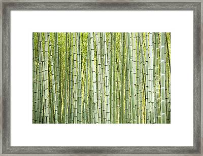 Bamboo Trees Background Framed Print by Vaidas Bucys