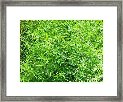 Bambou - Ile De La Reunion Framed Print by Francoise Leandre