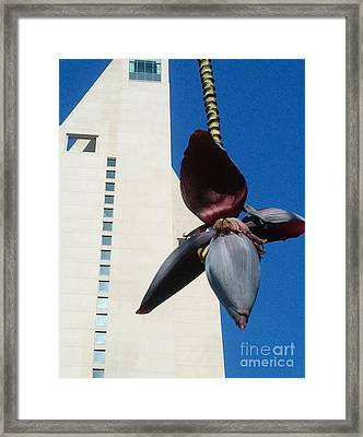 Framed Print featuring the photograph Banana Flower In The City by Jasna Gopic