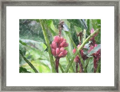 Banana Plant Framed Print