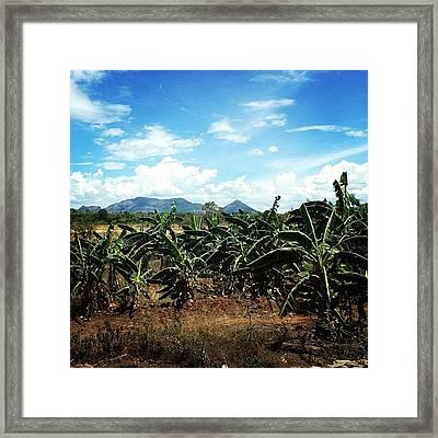 #banana #view #srilanka #field #sky Framed Print