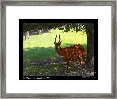 Bango Boy Framed Print