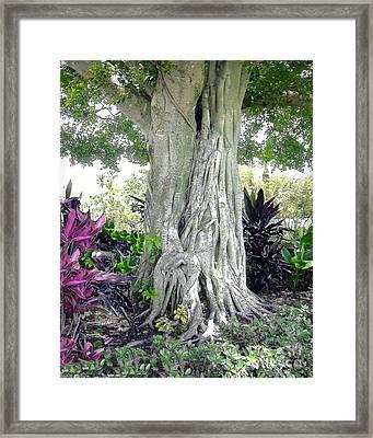 Banyon Tree Trunk Framed Print by Merton Allen