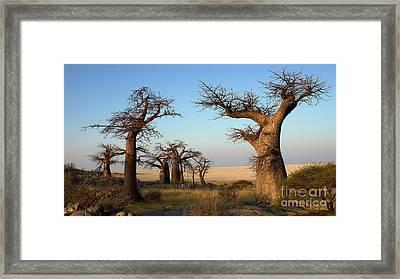 Baobabs Of Makgadikgadi Framed Print