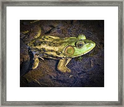 Barataria Swamp Frog Framed Print by Ray Devlin