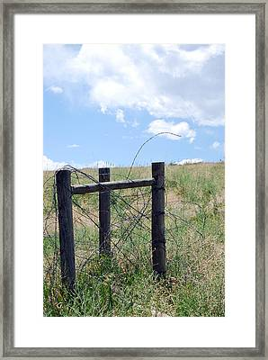 Framed Print featuring the photograph Barb by Amee Cave