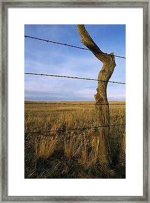 Barbed Wire Fence Along Dry Creek Road Framed Print by Gordon Wiltsie