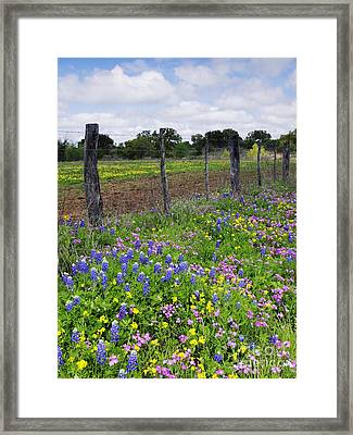 Barbed Wire Fence With Wildflowers In Foreground Framed Print
