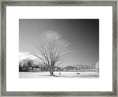 Bare Frozen Tree In Winter Framed Print by Yaplan