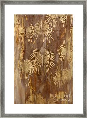 Bark Beetle Galleries Framed Print by Ted Kinsman